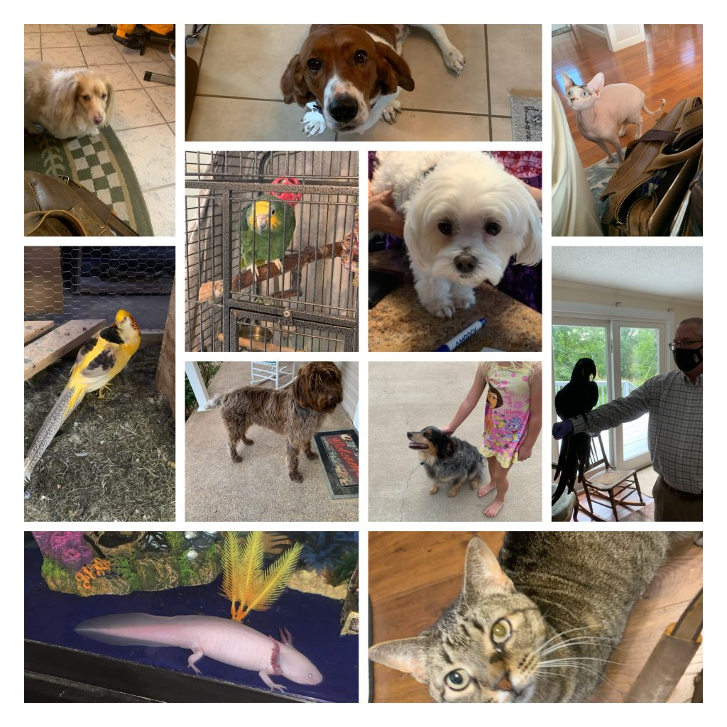 A collection of various animals from my home visits